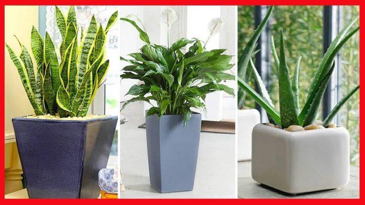 10 Plantas que vão deixar sua casa sempre com o ar renovado