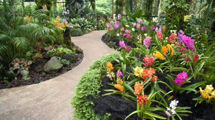 5 Tipos de Flores que Ira Alegrar o seu jardim