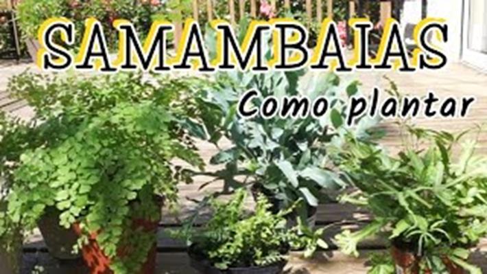 Acerte no Cultivo de Samambaias
